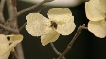Paper Flower: Dogwood