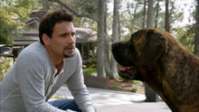 Suburgatory: Stray Dogs